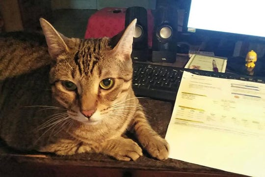 A volunteer who is fostering Sebastian shared that he likes to help her work and is computer literate.