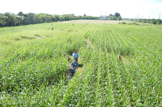 The Countryside Corn Maze will donate a portion of its proceeds to two local fundraising efforts: The Buggy Bunch on Oct. 13-14, and the Centennial MacWilliam Park Restoration Project on Oct. 27-28.