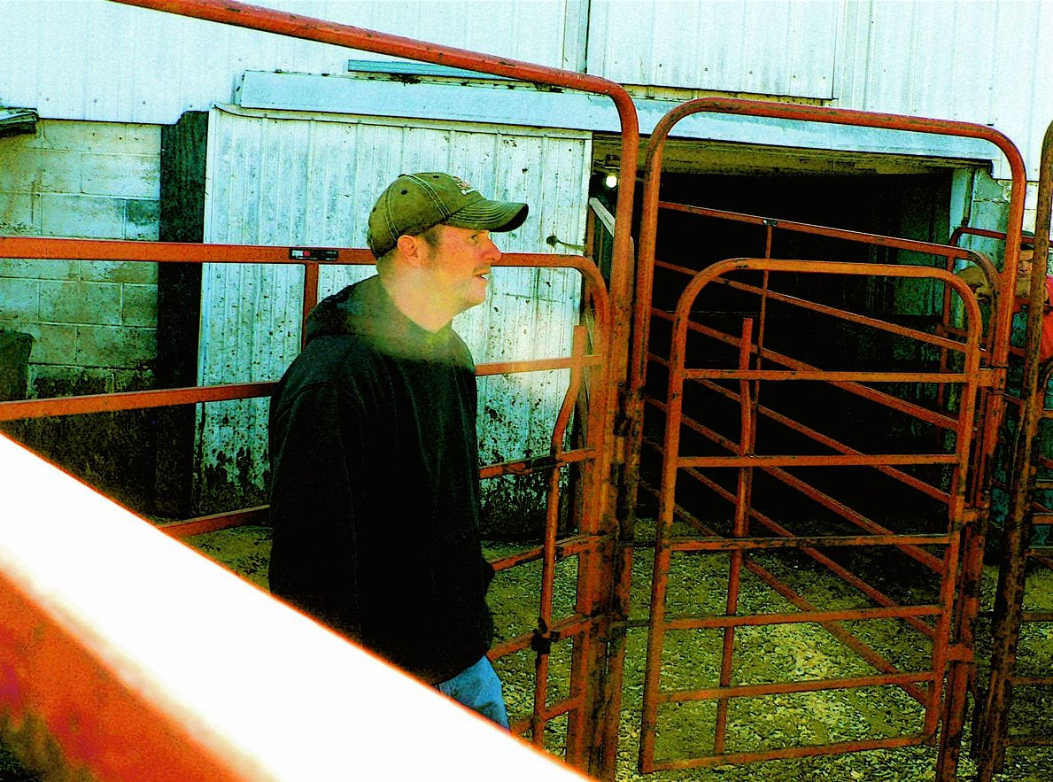 Cory Biddlingmeier, Tom's son and also an auctioneer keeps the cattle moving through the sale ring.
