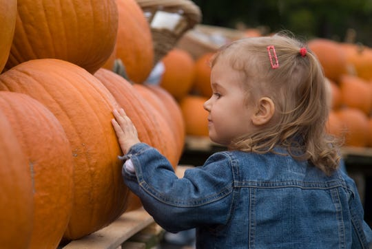 Whether it's for picking, painting, carving or decorating, pumpkins are featured at many fall events!