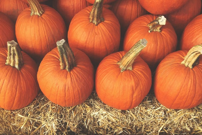 The 18th annual South Jersey Pumpkin Show will be held from 10 a.m. to 8 p.m. Oct. 9 and 10 a.m. to 5 p.m. Oct. 10 at the Salem County Fairgrounds.