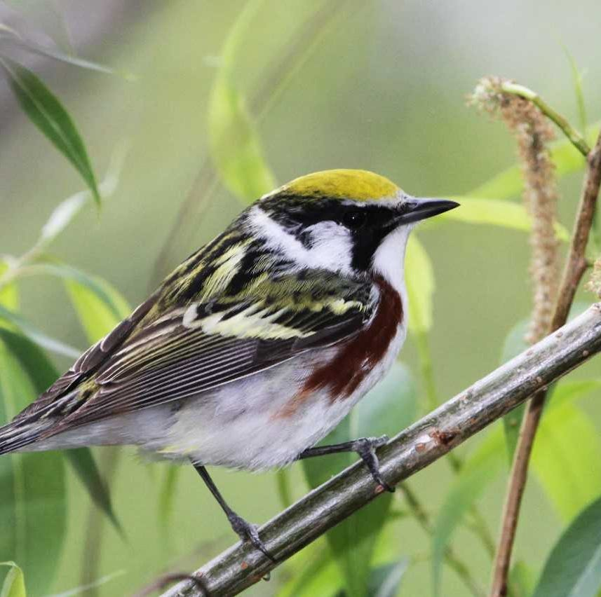 For the Birds: Not all birds go for bird feeders