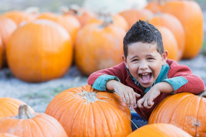 Fall events begin this weekend in Southwest Florida.