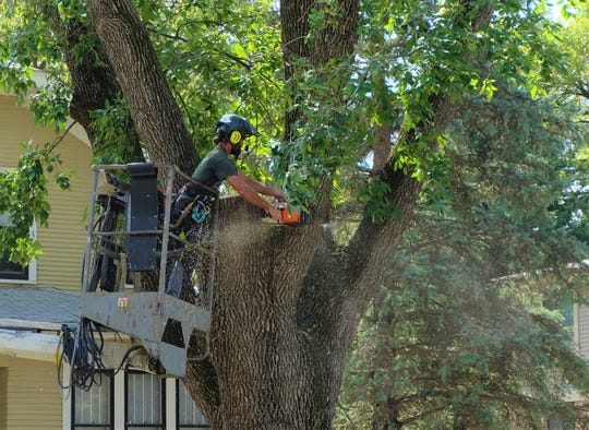 Seth Bihun, owner of Total Tree Care of Iowa, removes branches from an ash tree on Thursday, Sept 27, 2018 on Market Street.