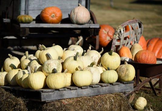 1024 Kclo Pumpkin 02 Al