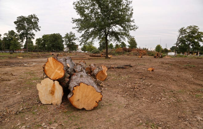 Large stumps remain were tall oak trees once stood Thursday, September 27, 2018, at the Tippecanoe County Fairgrounds. Numerous trees are being removed as part of the master plan for the development of the fairgrounds.