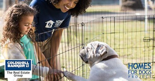 Coldwell Banker and Lakeshore Humane Society are teaming up for a 'Homes for Dogs' event.