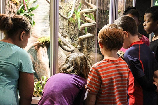 Kids learn interesting facts about frogs in the traveling Frogs! exhibition.