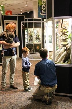 Families enjoy searching for frogs in the traveling Frogs! exhibition.