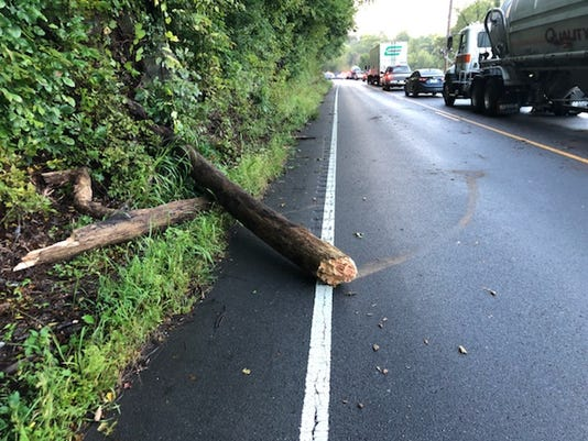Tree falls on car, kills Montgomery County driver in Dickson County