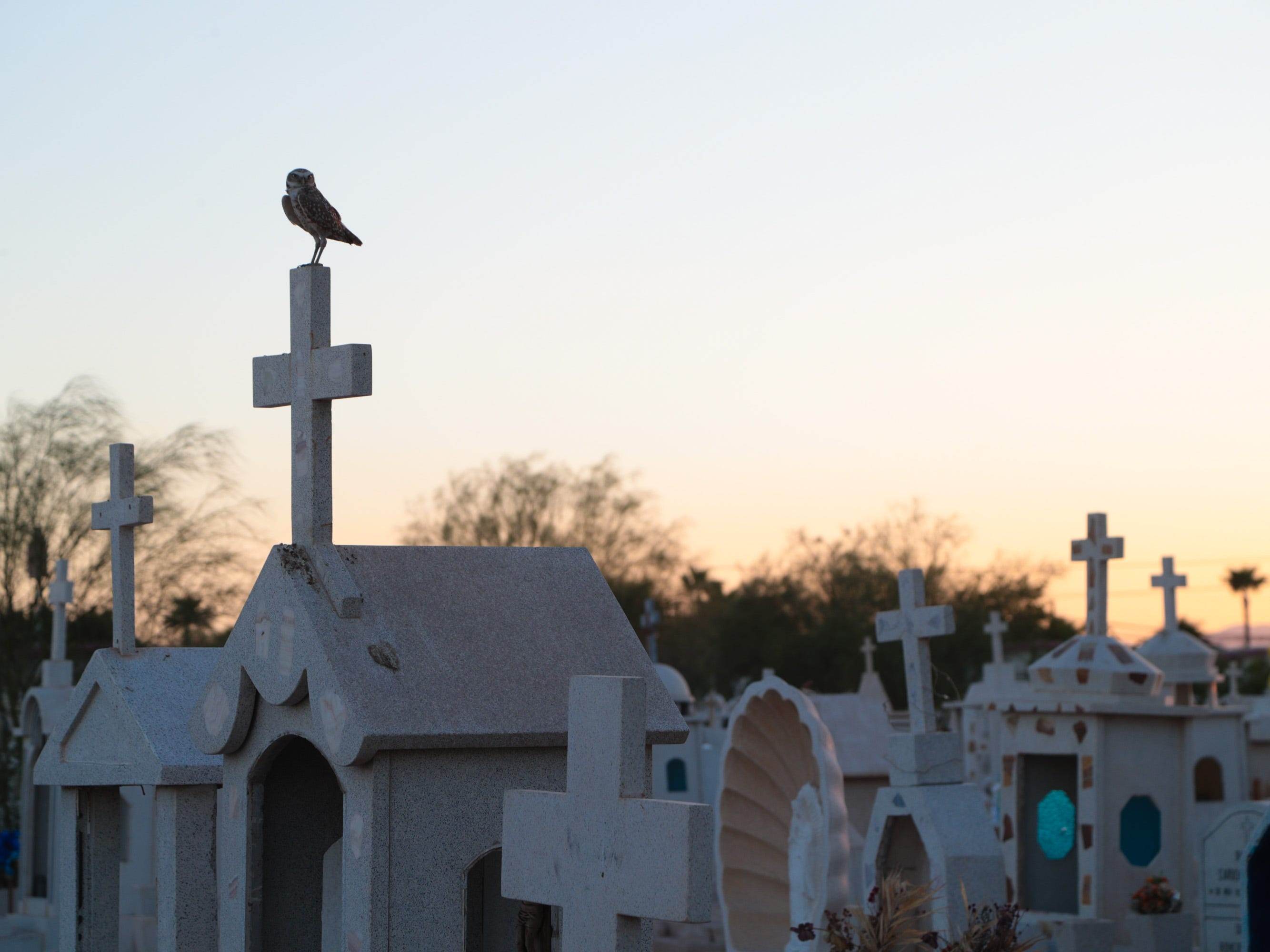 A burrowing owl sits atop a headstone in Mexicali's Jardin Descanso Eterno cemetery.