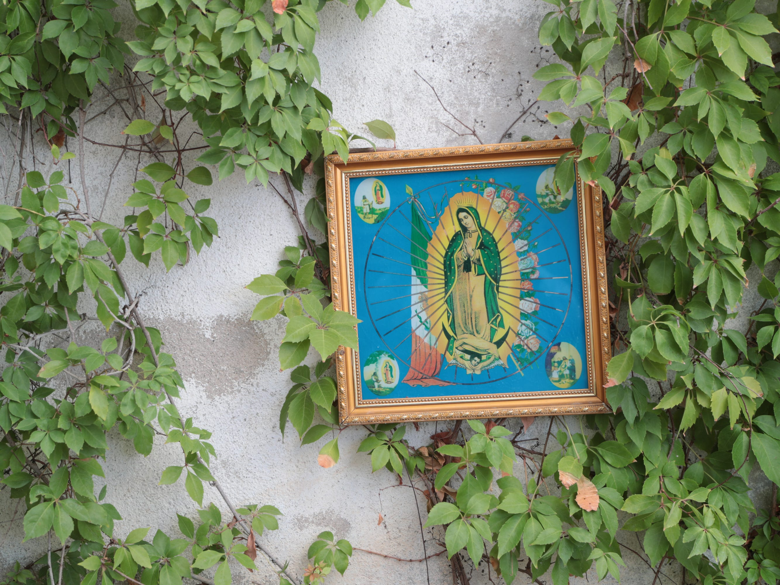A painting of the Virgin of Guadalupe hangs in the Arámbula family garden in the neighborhood Colonia Vicente Guerrero in Mexicali.