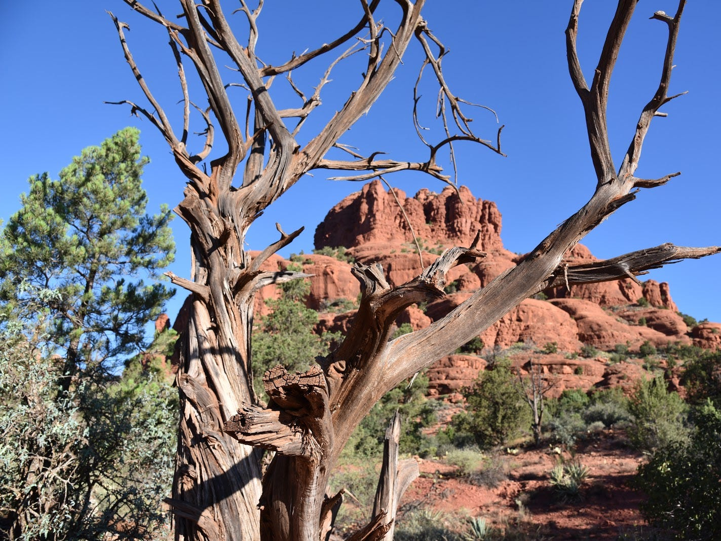 Rector Connector spins off Courthouse Butte Loop.