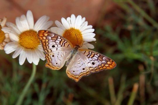 La exhibición Fall Butterfly del Desert Botanical Garden educa al público sobre las mariposas y ofrece una experiencia inmersiva.
