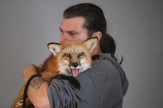 1 fox Img 9057