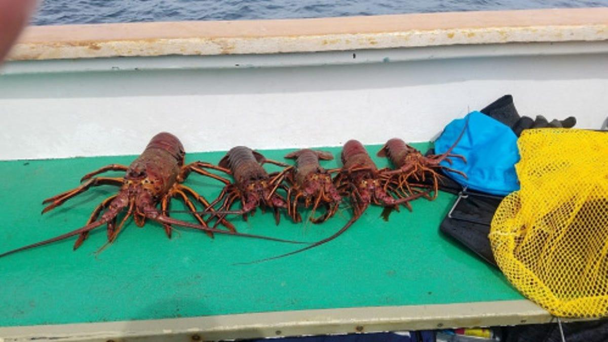 Carrie Wilson: Lobster season now open