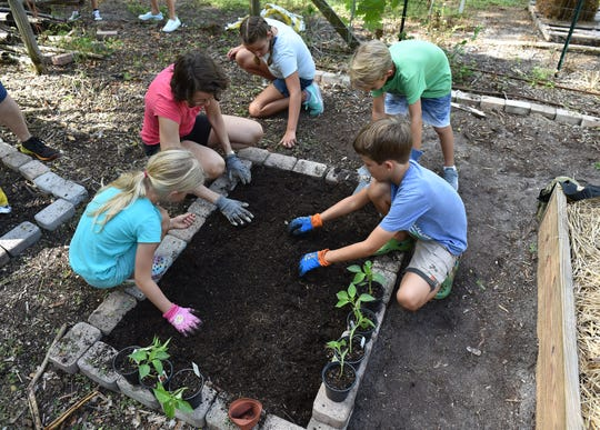 """Homeschoolers (clockwise from left), Maylee Meert ,7, her mother, Charlie Meert, Gigi Lamarra, 9, Max Lamarra, 7, and Rylan Meert, 9, work together to prepare the soil for planting inside one of several garden beds at the community garden at Heathcote Botanical Gardens on Thursday, Sept. 27, 2018, in Fort Pierce. """"I think it's great for the kids to learn where their food comes from, and I think they are more interested in trying new foods when they've helped to grow them,"""" Charlie Meert said."""