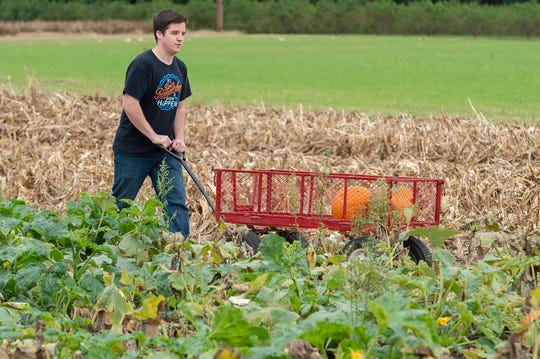 Michael McLain of Smyrna with pumpkins that he picked at Fifer Orchards in Camden.