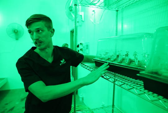 Nick Cline, director of cultivation at Grow Ohio, talks about the company's first marijuana plants at their Newton Township facility.