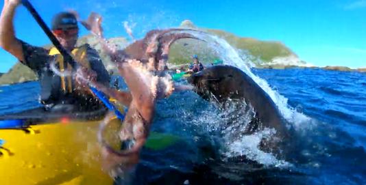 Seal Slap
