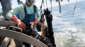 """Can this """"sea ranch"""" save the seafood industry? The Catalina Sea Ranch harvests 20,000 pounds of mussels a month and plans to expand to other products."""