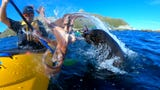 A man was kayaking with his friends when a seal sprung out of the water and slapped him in the face with an octopus.