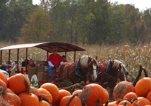 "Hayrides, stacks of pumpkins and more are found at Shaw Farms Fall Festival. In October, Shaw Farms will be designated an ""Ohio Bicentennial Farm"" by the Ohio Department of Agriculture."