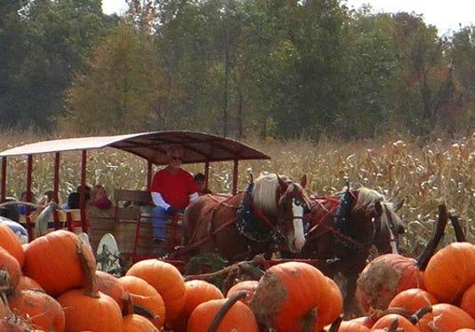 Hayride At Shaw Farms