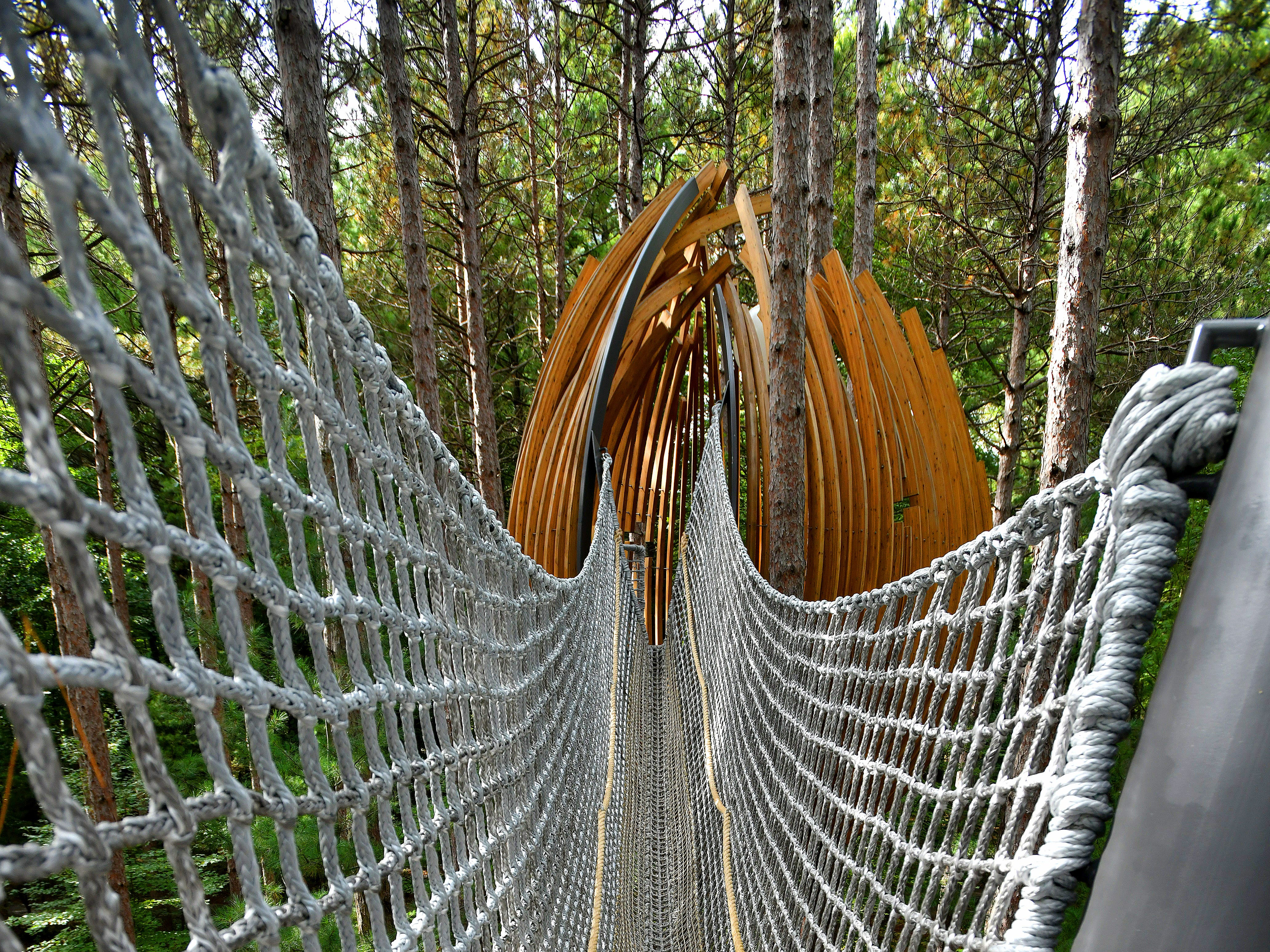 A rope bridge beckoning the adventurous stretches high above the ground at the new Canopy Walk in Midland.  Part of the Dow Gardens experience, the Canopy Walk was built in Whiting Forest to allow people to experience live in the tree tops.