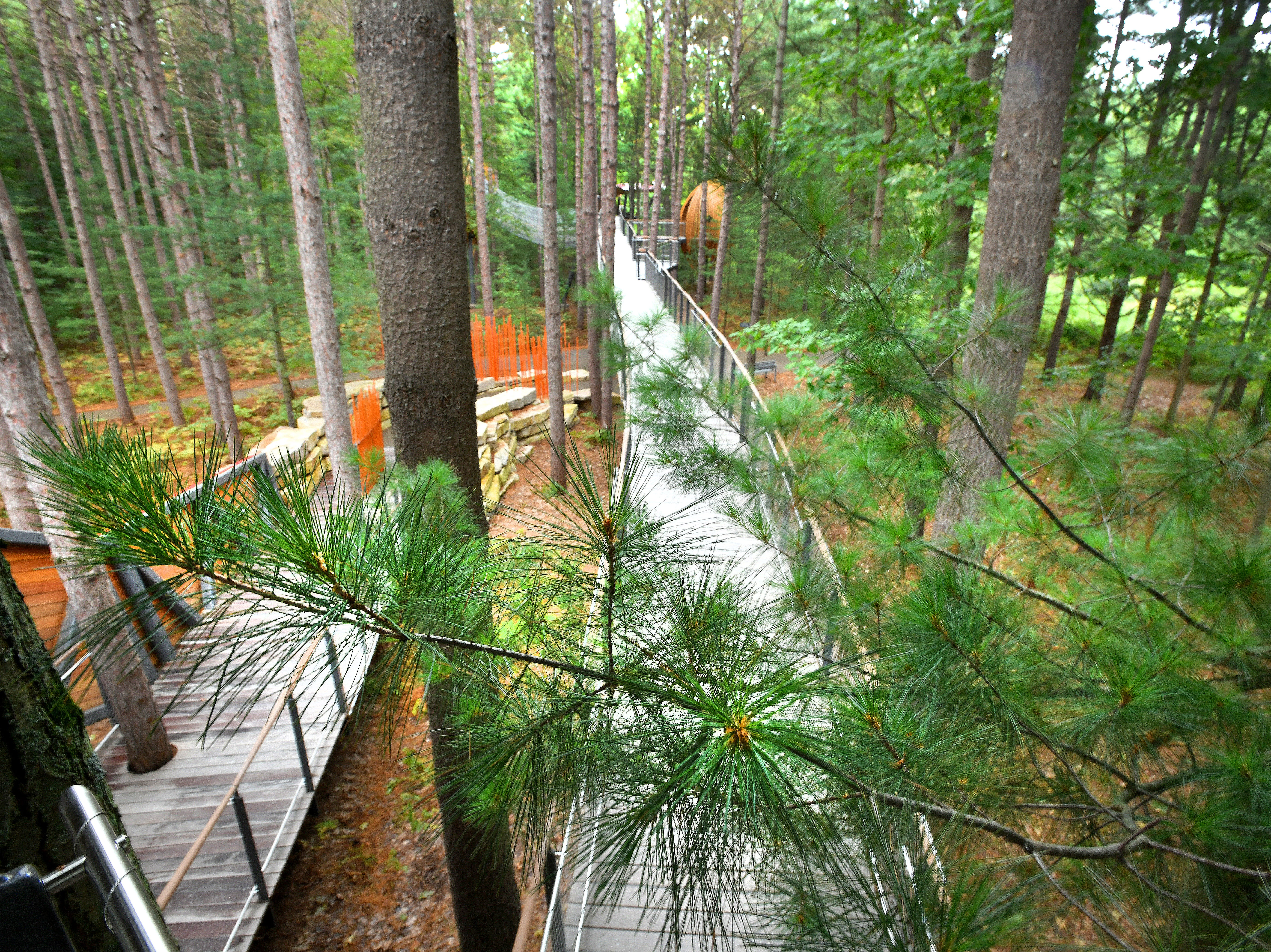 The soft, silky needles of Michigan's state tree, the white pine, are within reach of the walk, high above the ground.