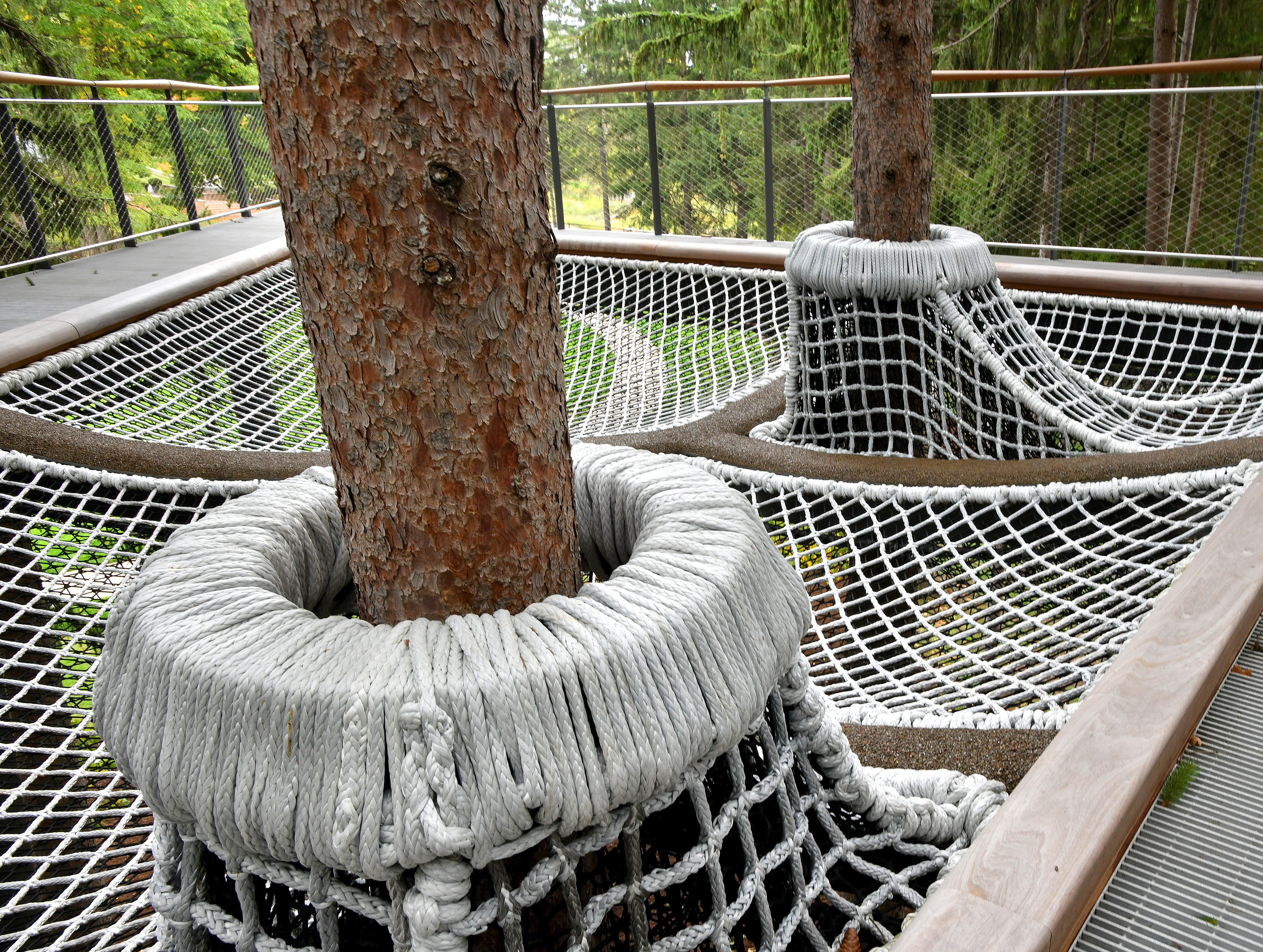 """The """"Spruce Arm"""" includes a rope experience that kids are sure to enjoy, with Norway Spruce trees growing right through the feature."""