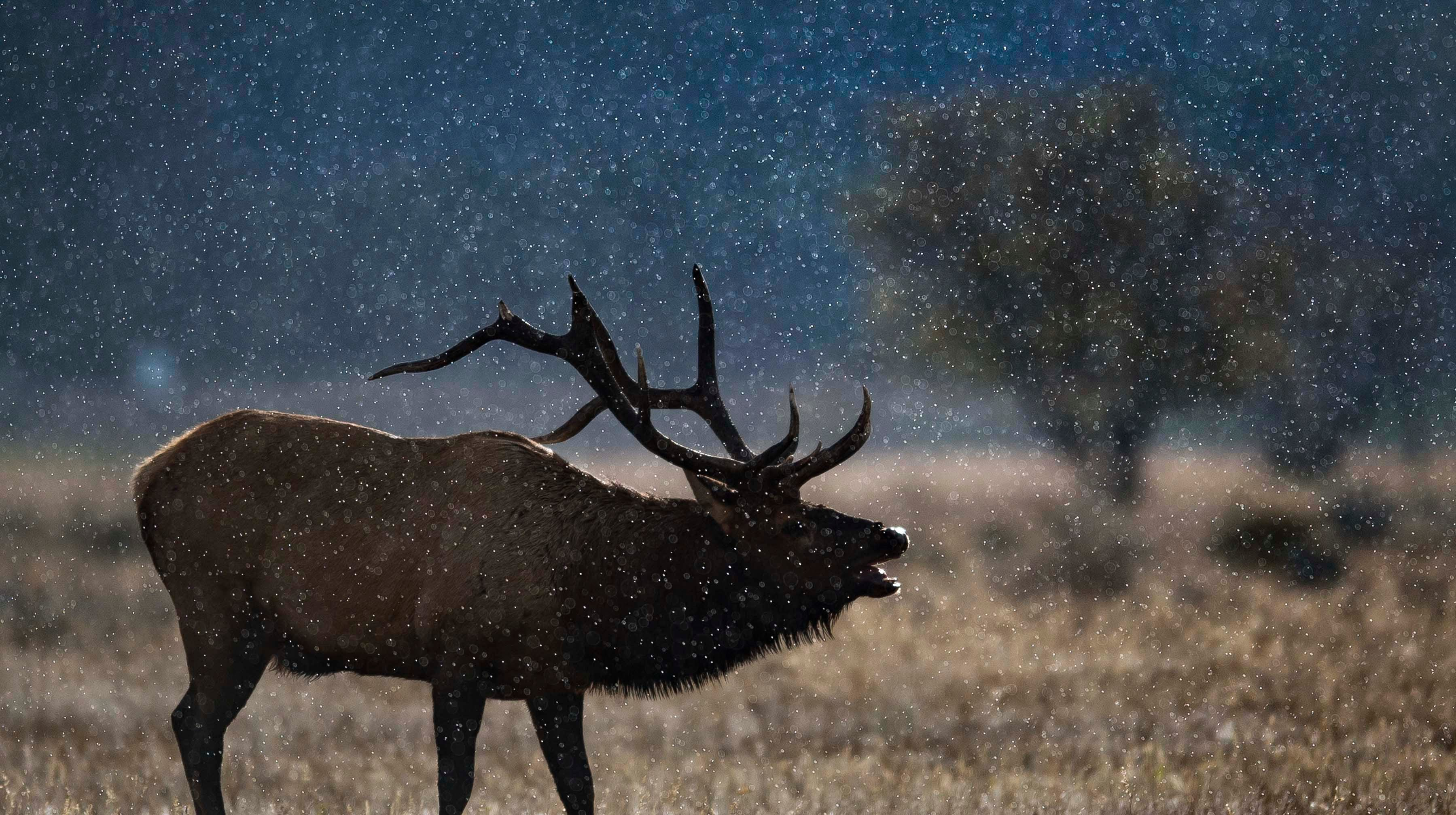 Elk, fall colors take over Rocky Mountain National Park