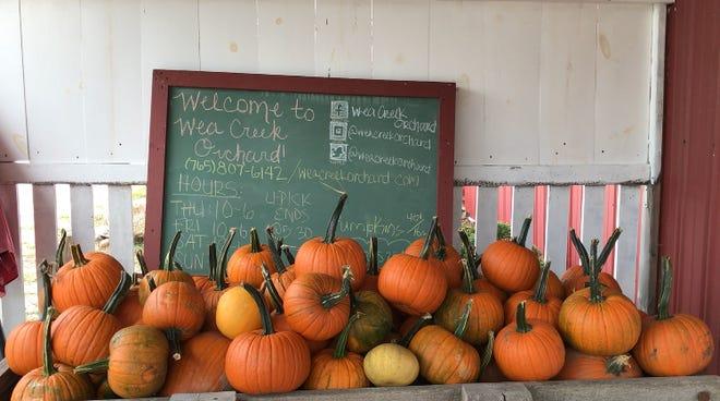 Wea Creek Orchard's u-pick pumpkin patch offers thousands of pumpkins to take home.