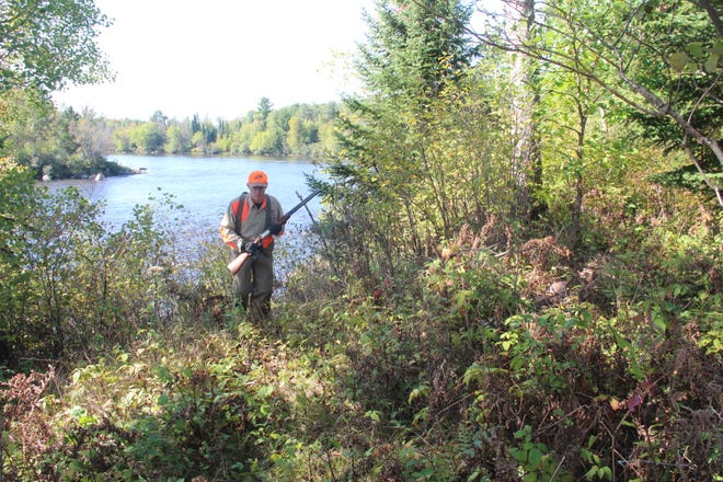 Gary Zimmer of Rhinelander hunts for ruffed grouse and woodcock at the Menard Island Resource Area, a state-owned parcel of land bordering the Wisconsin River near Rhinelander.