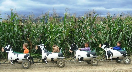Kids ride the cow train, a daytime activity offered at La Union Maze.