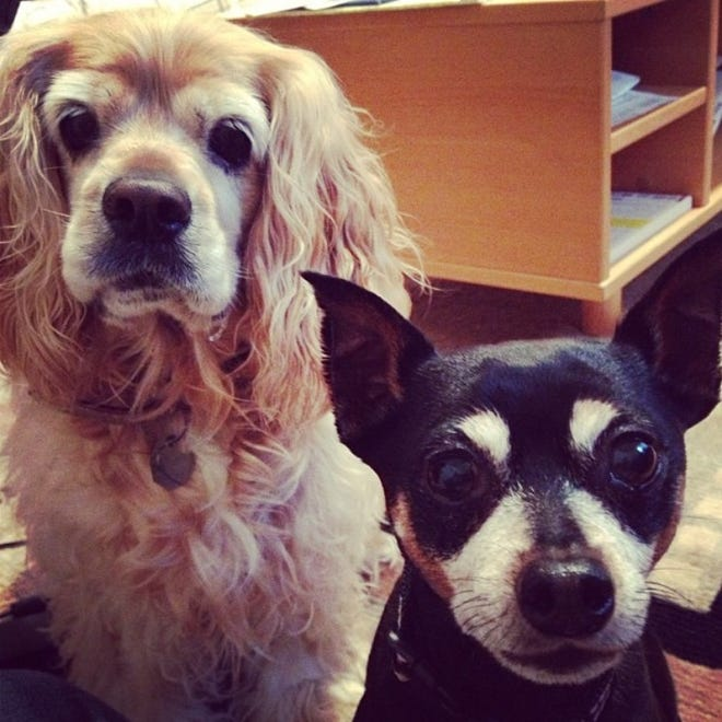A Simi Valley couple is suing an Orange County pet crematorium for allegedly mixing the ashes of their beloved dogs, Winnie (left) and Wesley, with those of other animals, even though the couple paid for individual cremations.