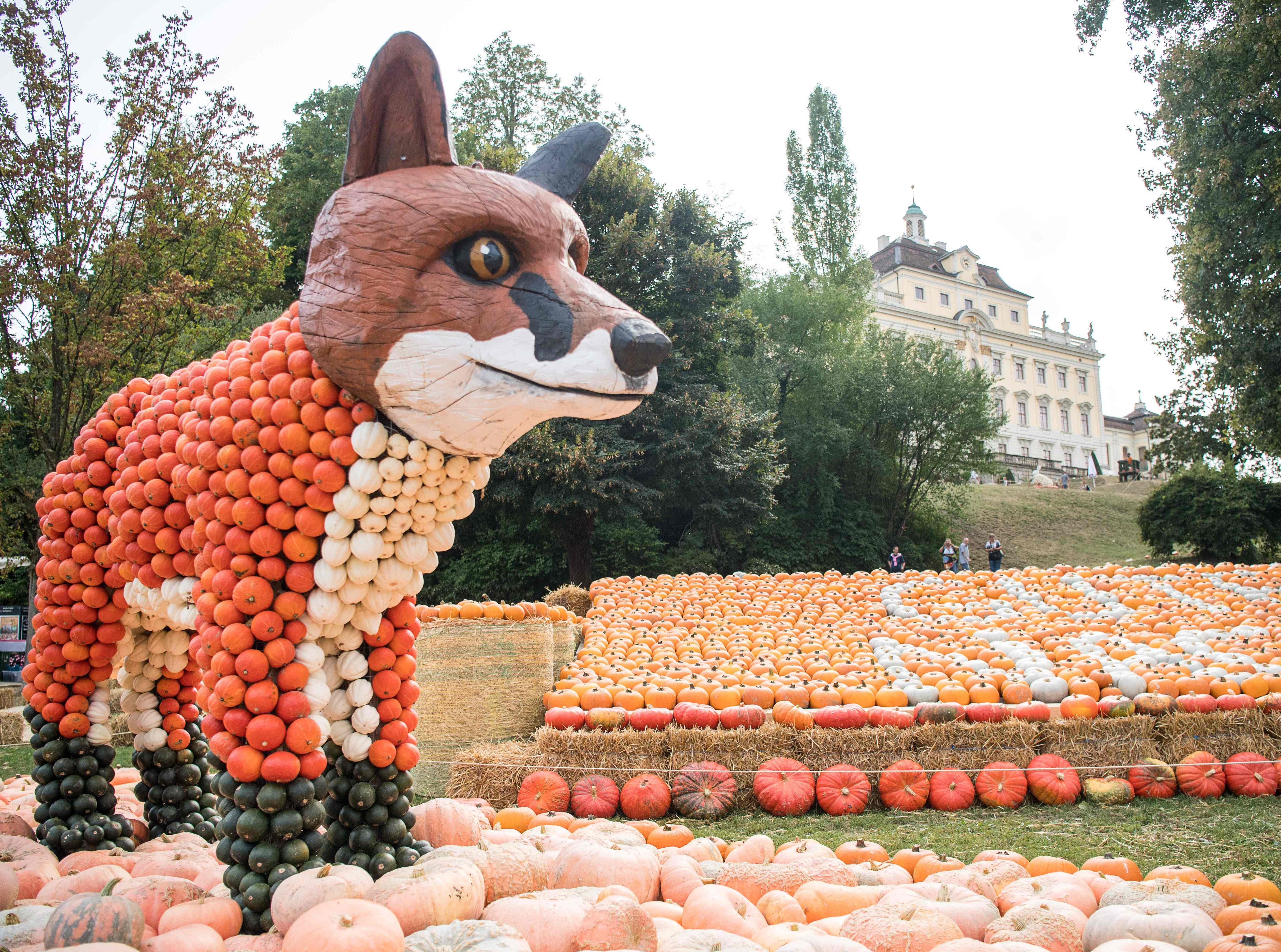 A fox sculpture made of pumpkins on display during the opening of a pumpkin exhibition in Ludwigsburg, Germany on August 30, 2018. More than 450,000 pumpkins were used to create an artificial world with animal sculptures and forest scenery.