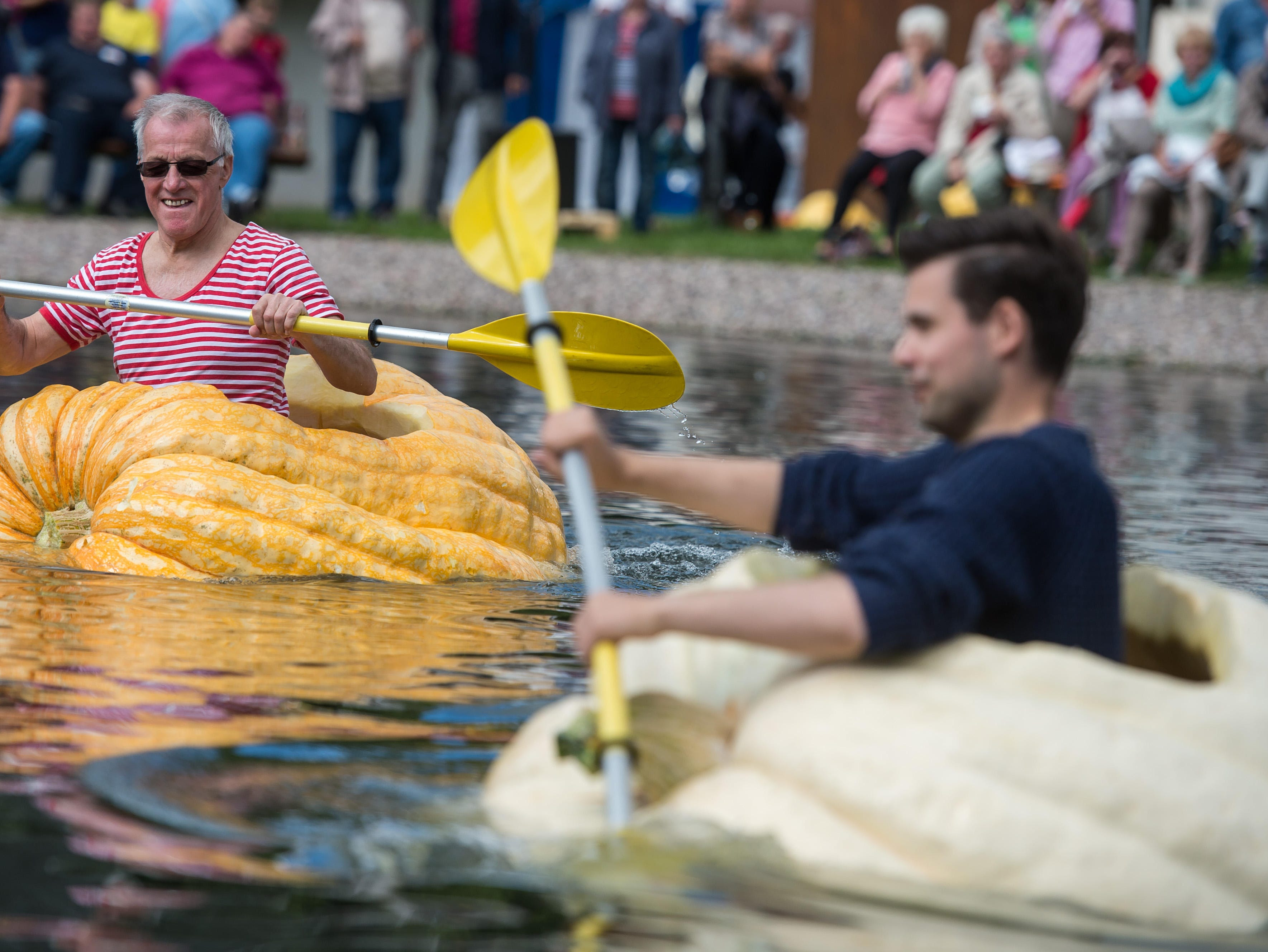 With the first touch of cool weather, it's time to head to local farms and fields to see how this round, orange fall favorite can be transformed into insects, animals or airplanes. Here, participants paddle in hollowed out giant pumpkins during the traditional pumpkin paddling in Fambach,Germany, on September 10, 2017.