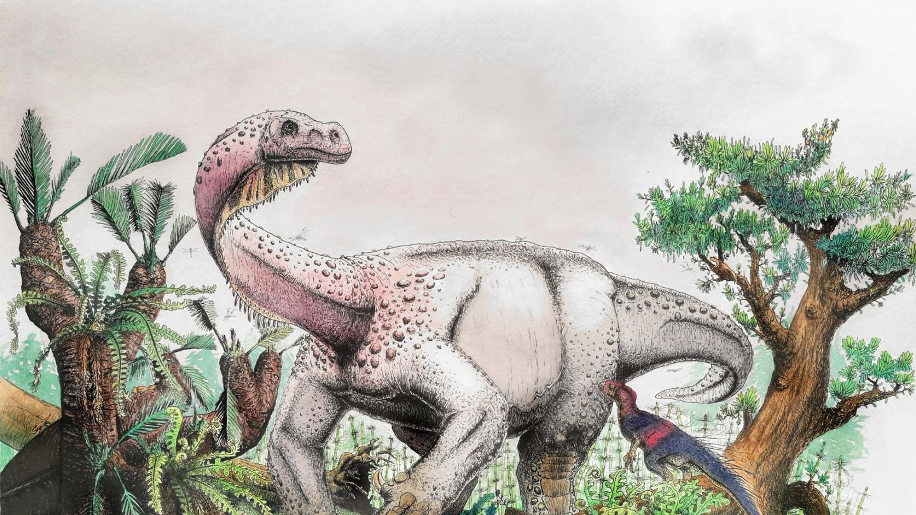 Giant dinosaur species, size of elephant, discovered in ...