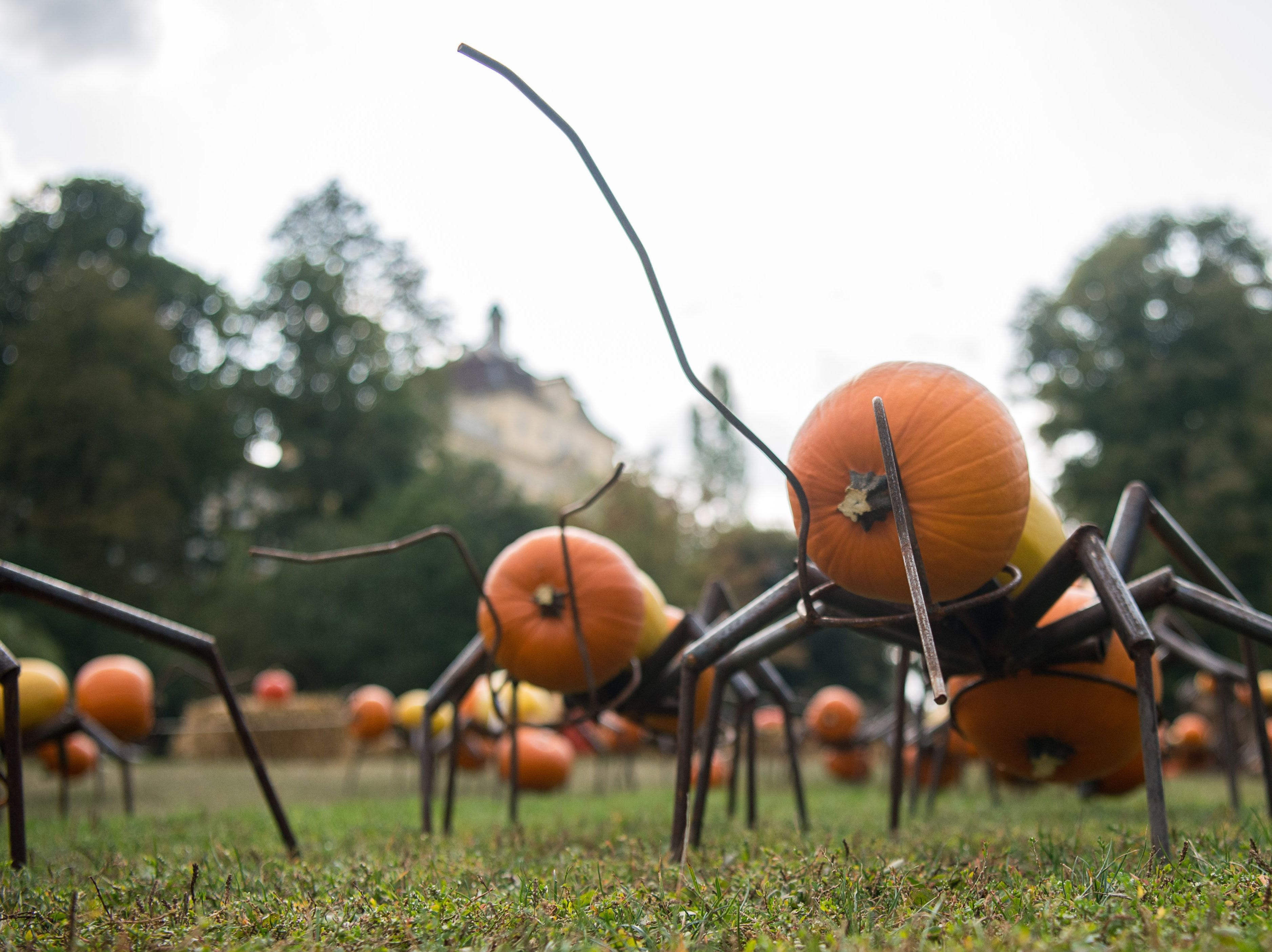 The Ludwigsburg exhibit also featured pumpkin ants.