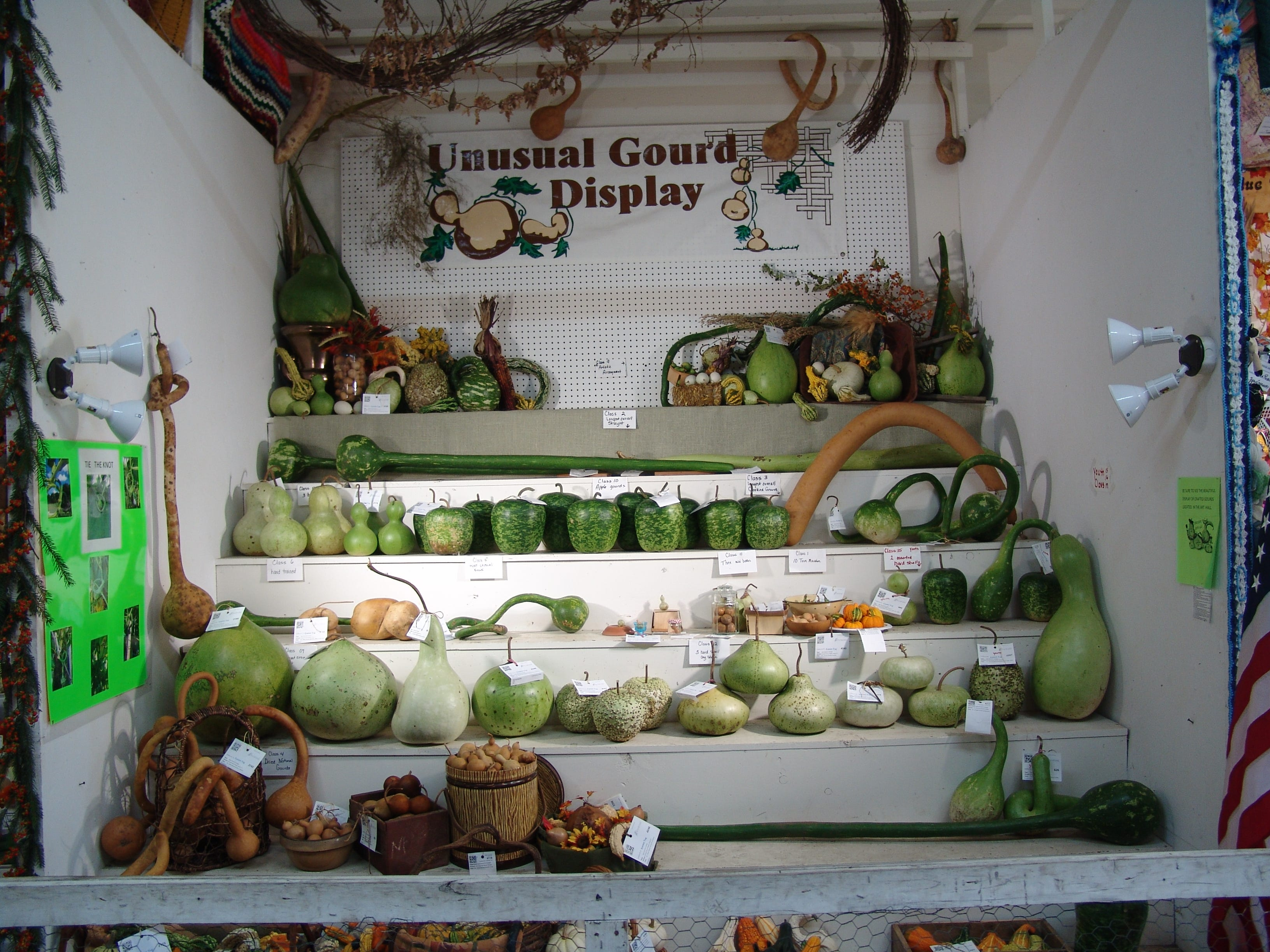 Gourds in the Unusual Gourd Display.
