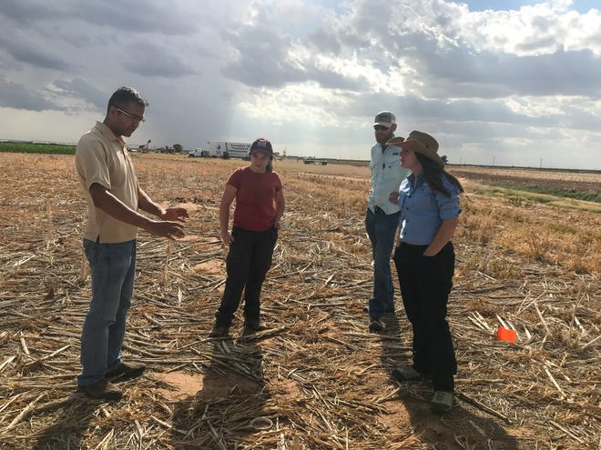 From left, New Mexico State University Assistant Professor Rajan Ghimire, NMSU undergraduate student Taylor Sanchez, NMSU grad student Jeremy Schallner and Oklahoma State University undergraduate student Alyssa Whiteman discuss the use of cover crops for resilience. Additional expertise for this project comes from Zeigler Geologic Consulting, the USDA Southwest Climate Hub, Oklahoma State University, and the University of Oklahoma.