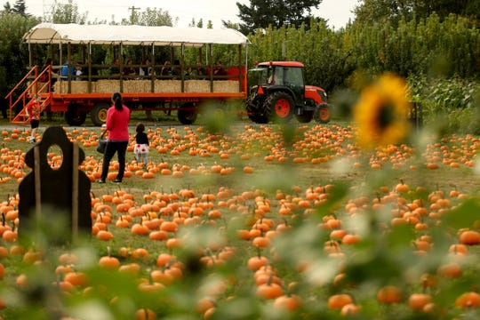 The Harvest Festival at E.Z. Orchards in Salem on Saturday, Sept. 29, 2018.