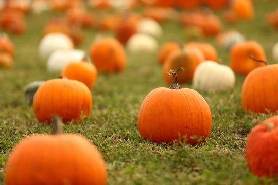 Pumpkin season is here!