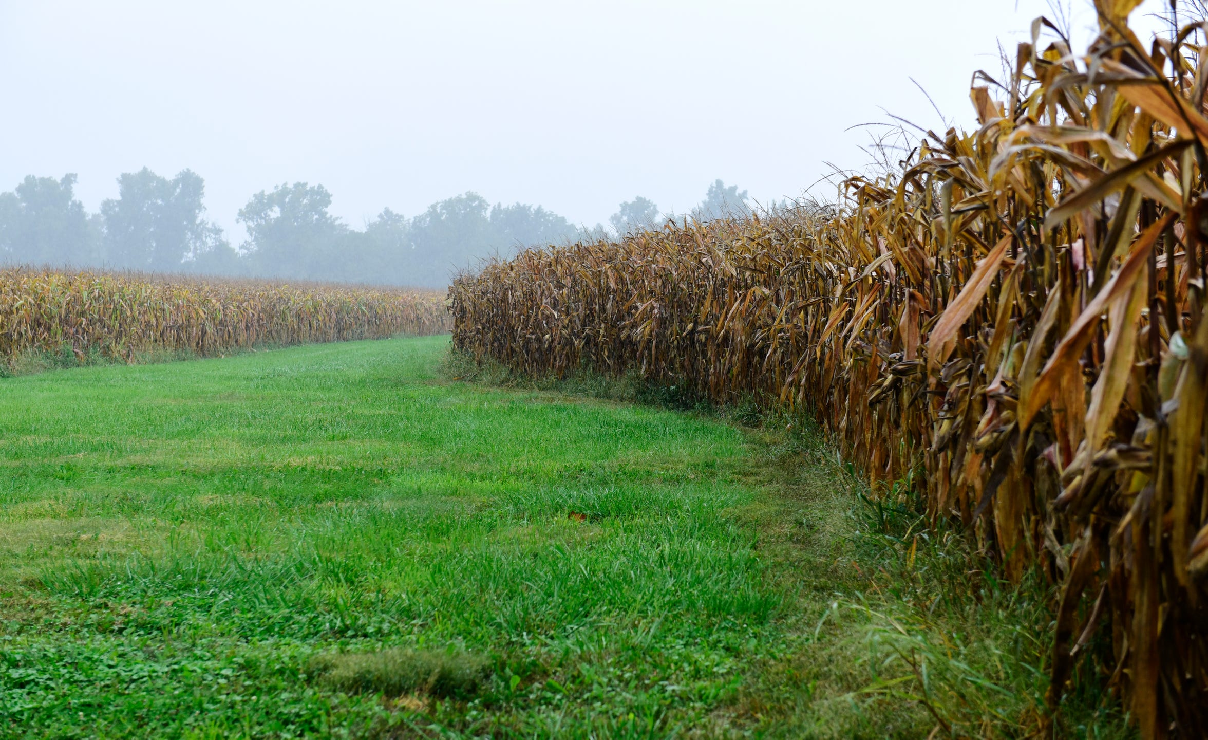 The U.S. Department of Agriculture's estimated bottom line loss for farmers in 2018 comes to an average of $1,600.