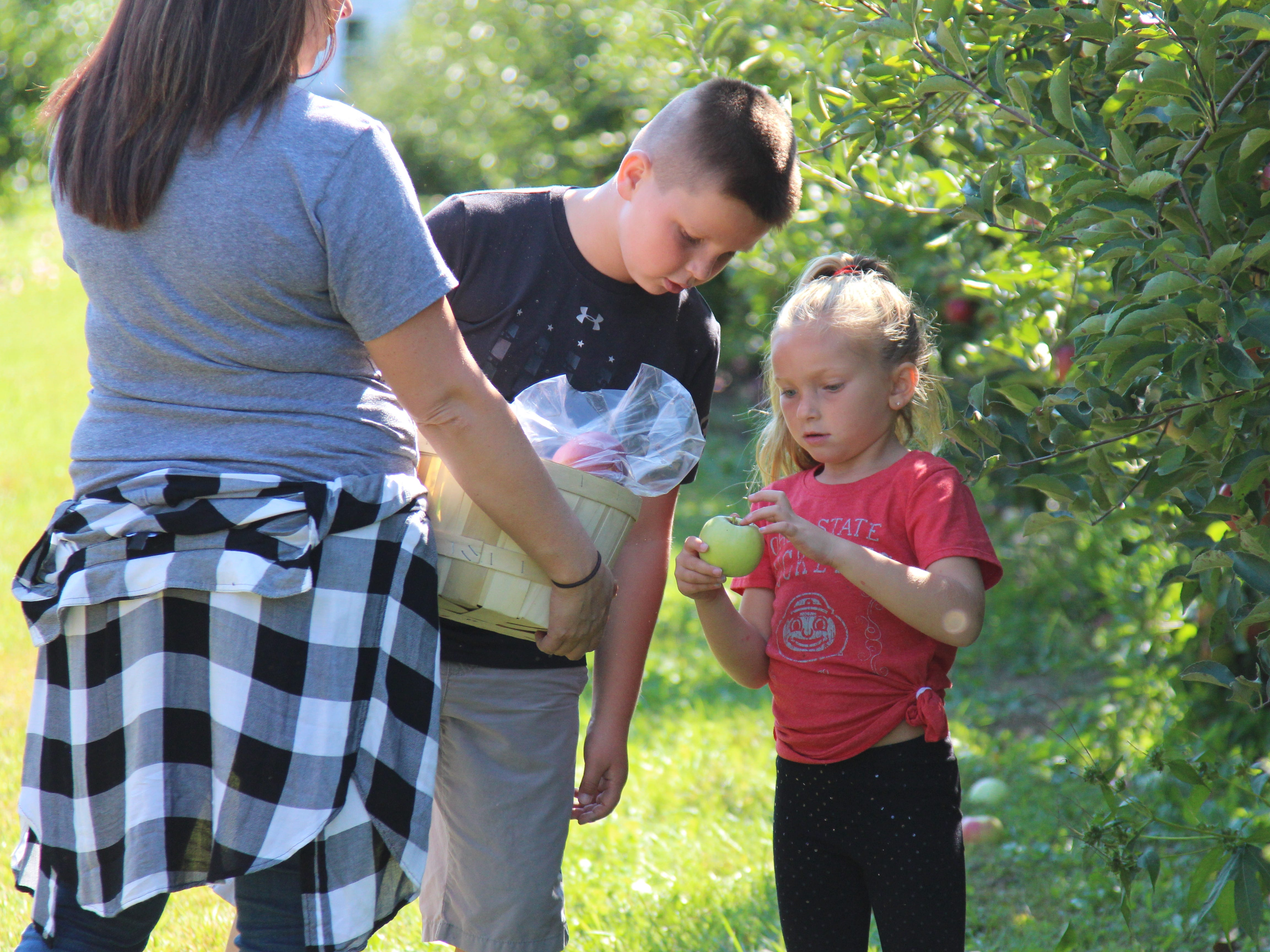 Elijah Ristic, 10, and Eva Ristic, 6, pick a bucket of apples Saturday at Applefest at Lawrence Orchards.