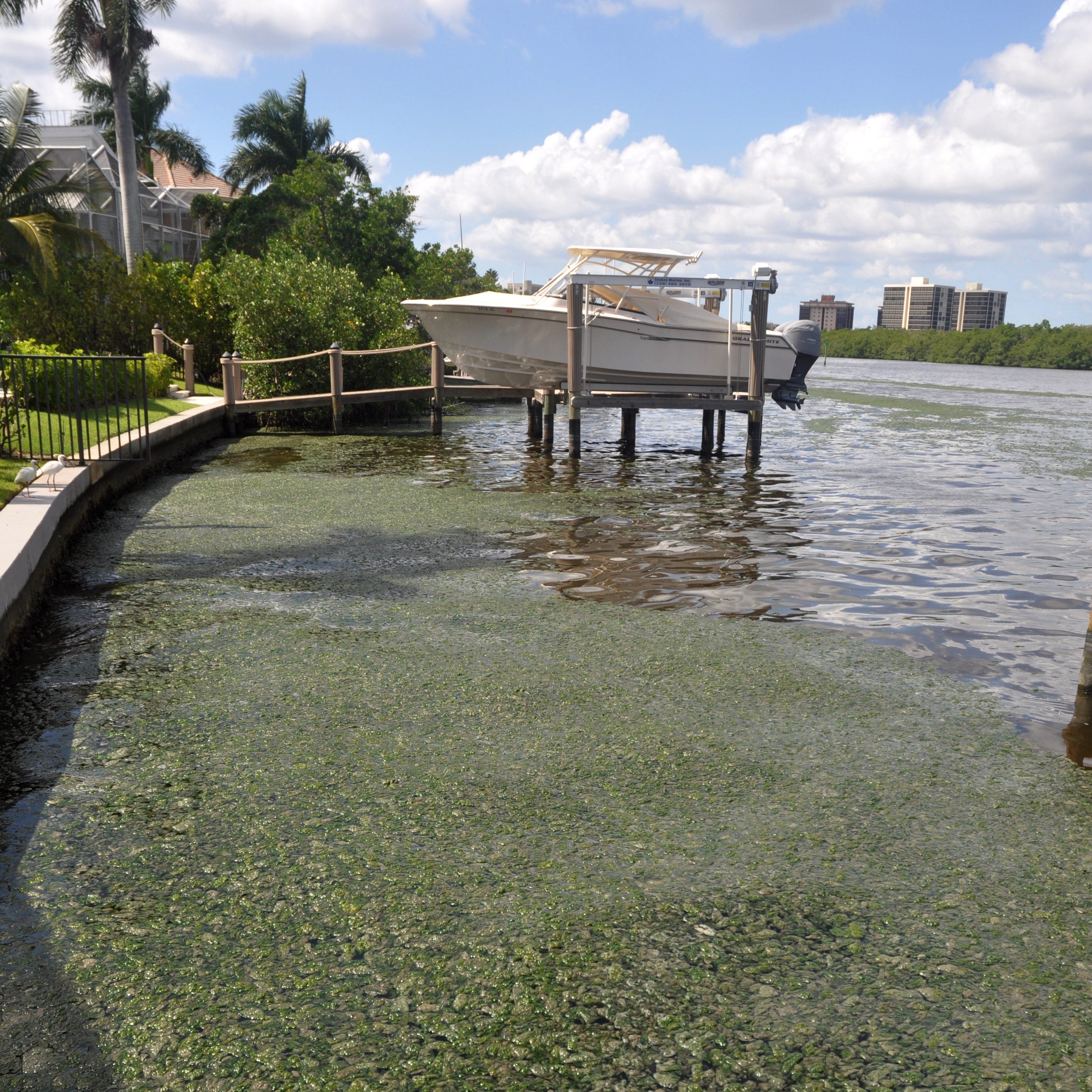 Editorial: CDC a welcome entry in quest to see whether SW Florida algal blooms harm humans