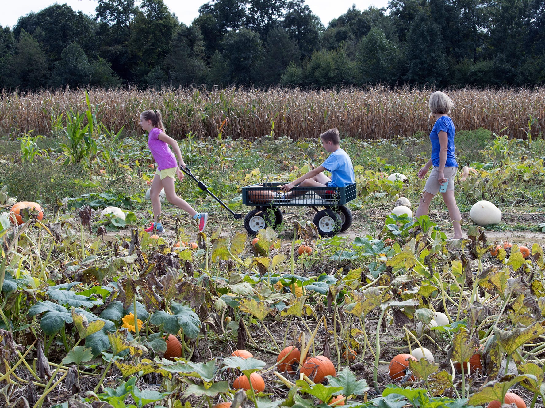 A wagon ride through the pumkin patch at Paulus Orchards in Monaghan Township Sunday September 30, 2018.