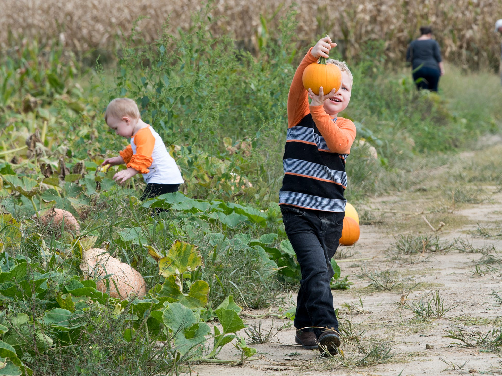 Reid Leedy,  4, of Gettysburg, finds the perfect pumpkin at Paulus Orchards in Monaghan Township.