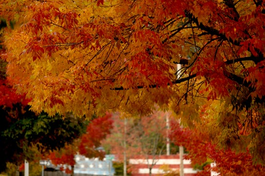 Leaves change color near a painted fence in Salem on Saturday, Sept. 29, 2018.